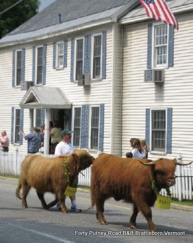 Strolling-of-the-heifers-8