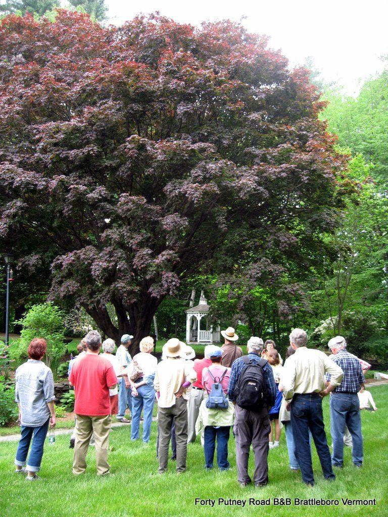 tree-tour-2