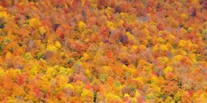 Hills with fall foliage colors