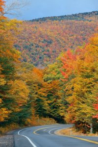 Country road through fall foliage