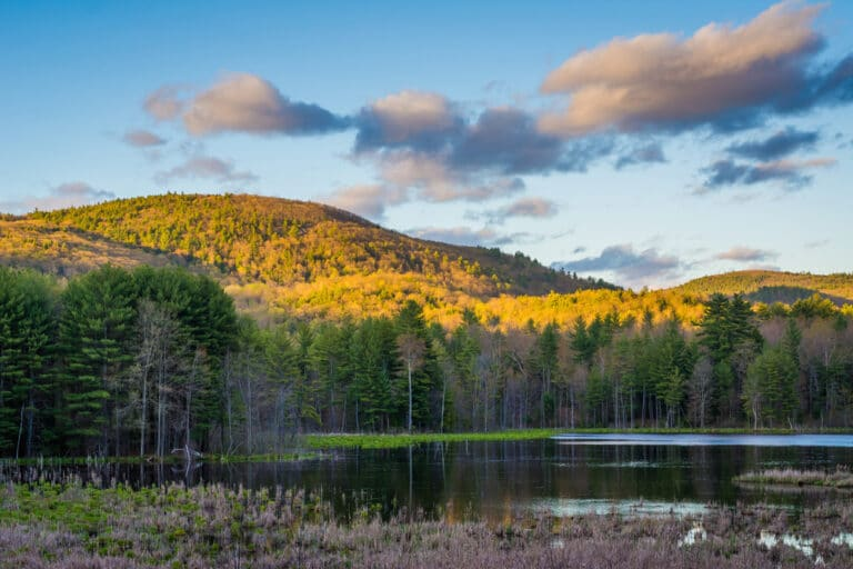 Enjoy the beautiful forested trails and views at Pisgah State Park near our Brattleboro Bed and Breakfast